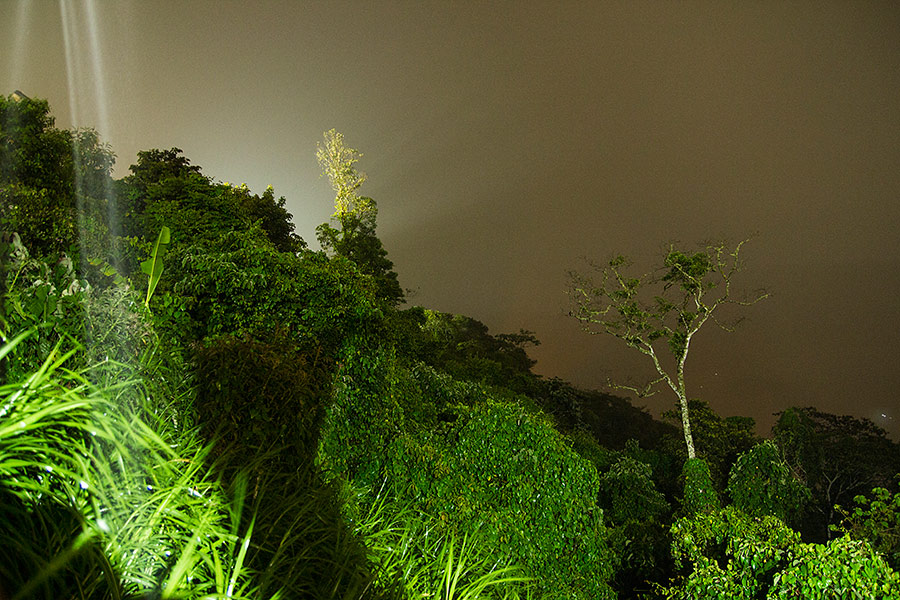 Bolivia, jungle, night, rain, green, trees, travel photography
